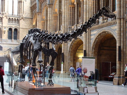 natural_history_museum_london_centrall_hall_diplodocus_dinosaur_travel_uk_guide.jpg